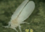 Korean_Melon_Insects